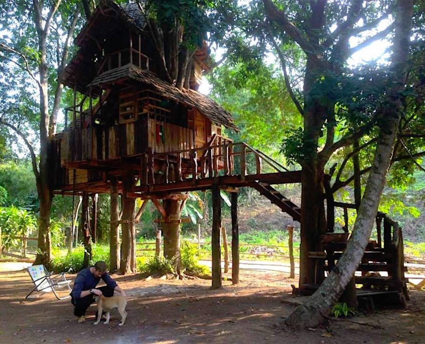 The Tree House of Dreams